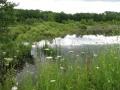 Herb Kebbel Wetland near Sparta, Ontario/David McLachlan