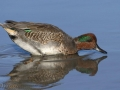 Green-winged Teal/Simon Dodsworth