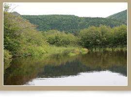 Embouchure du ruisseau Brook, Terre Neuve/Jessica Humber