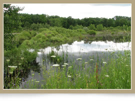 National Heritage Conservation Program Provides New Protection for Canada's Wetlands