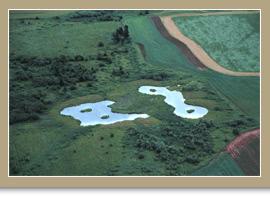Projet du marais Gill, Île-du-Prince-Édouard