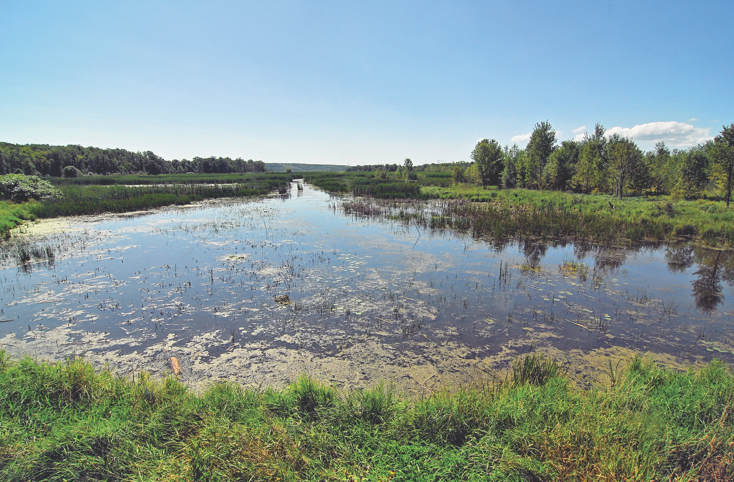 Conserving Wetlands to Help Fight Climate Change across Ontario