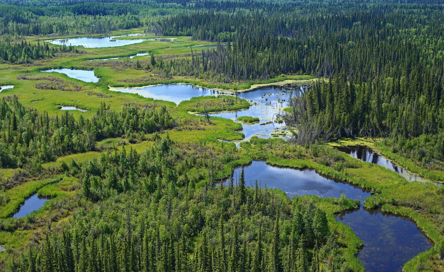 30 Years Conserving Wetlands in Eastern Canada