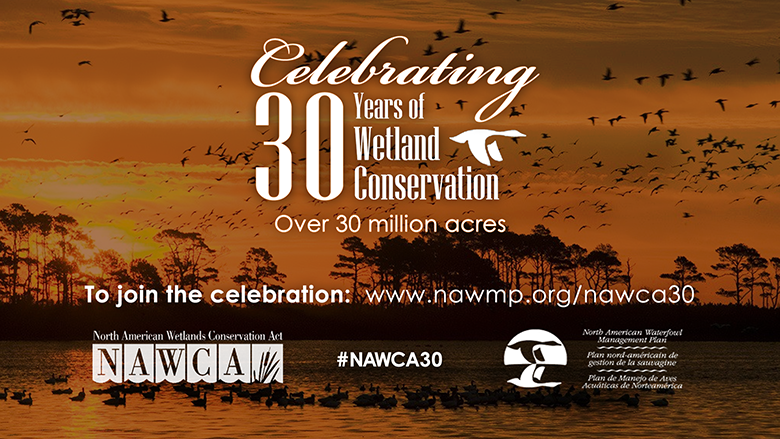 North American Wetlands Conservation Act – 30 Years Strong!